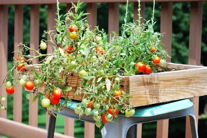 19 Inspirational Ideas for Recycled Hanging Baskets-10